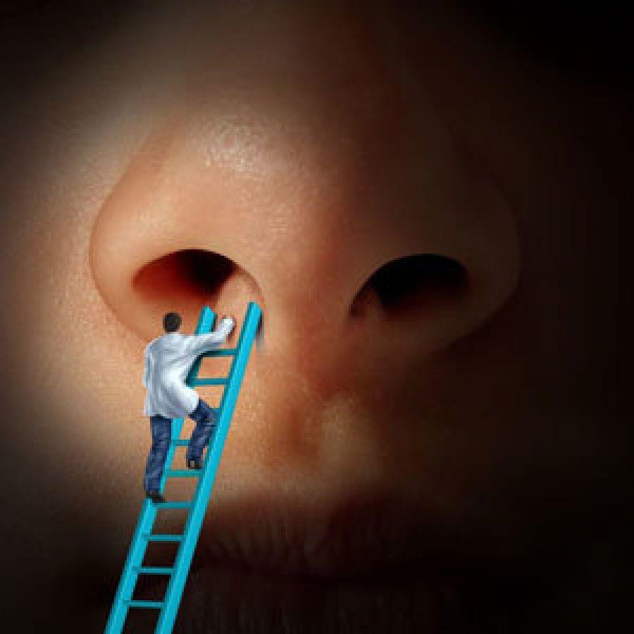 Những điều thú vị xoay quanh dáng mũi