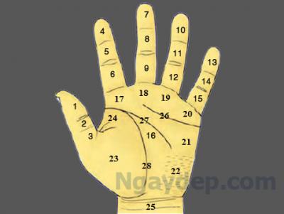 Vị trí nốt ruổi ở ;òng bàn tay có ý nghĩa gì